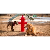 TBARK-465-US - Dog Fire Hydrant